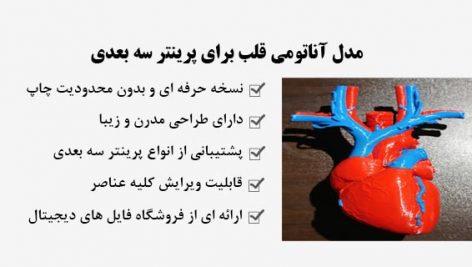 مدل آناتومی قلب